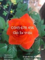 43C31375-EBDF-4DF0-8A1B-614CC67E5B2A.