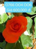 FB_IMG_1573219722552.